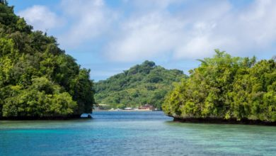 Photo of T88UW – Koror Island Palau, OC-009