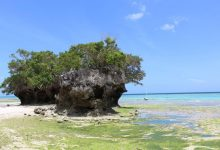 Photo of 5H4WZ – Pemba Island, AF-063
