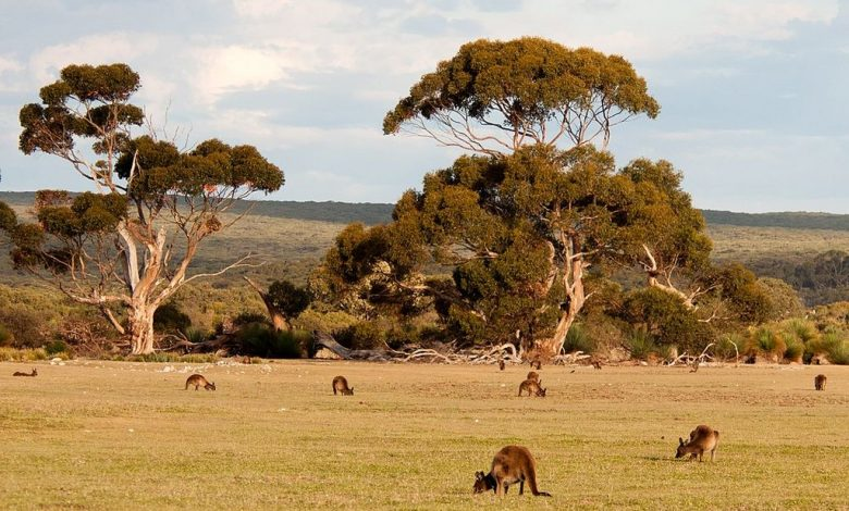 Photo of VK5KI – Kangaroo Island, OC-139